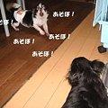 Photos: あそぼ~~~!!!