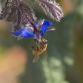 ポリジと蜜蜂