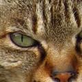 神社の猫0388