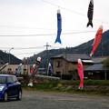 Photos: 鯉のぼり設置作業2