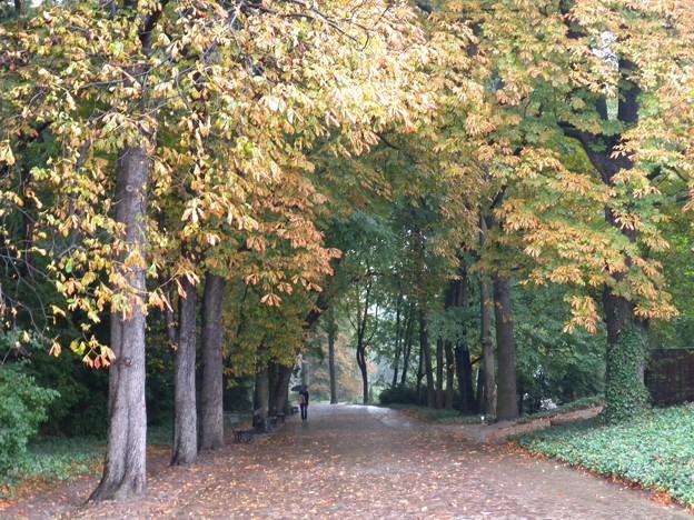 ポーランド ワルシャワ ワジェンキ公園の小道