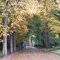 写真: ポーランド ワルシャワ ワジェンキ公園の小道