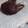 写真: 猫が自分の布団でねてくれる...
