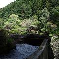 Photos: 090419_白丸ダム周辺_65