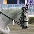 写真: 川崎競馬の誘導馬04月開催 桜Verその2-120409-15-large