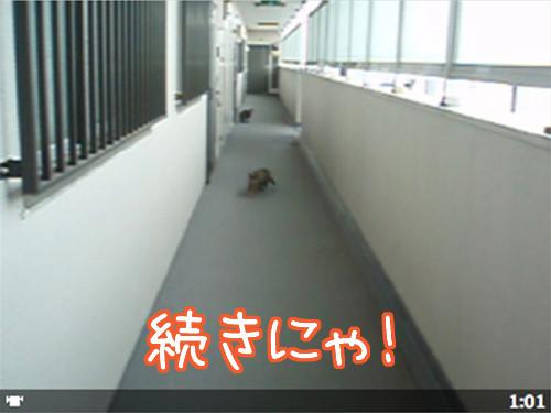 090126-2【猫ムービー】続きにゃ!