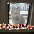 Photos: 090204-まちぶせにゃ!
