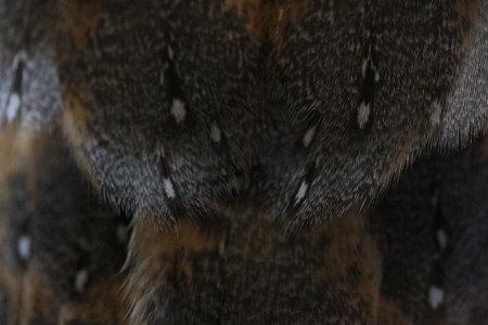 mame H21.3.5 羽の模様