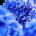写真: <<<Blue・・IN・・BLUE>>>