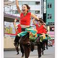 写真: よさこいチームSparking!_東京よさこい2008_01