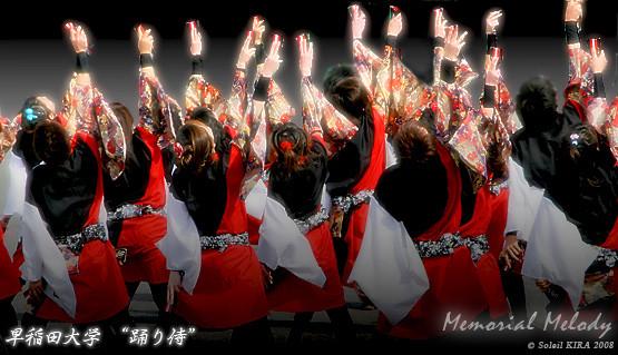 "Photos: 早稲田大学 ""踊り侍""_東京大マラソン祭り2008_bf1"