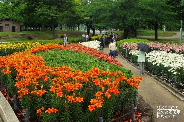 千種公園ゆり園 (48)
