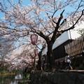 近江水郷の春