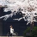 Photos: 春訪