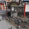 写真: 大須観音の鳩01