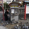 写真: 大須観音の鳩02