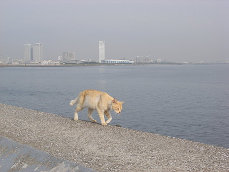 防波堤を歩く猫