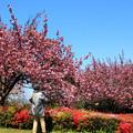 春と楽しむ