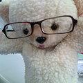 メガネ大好き!