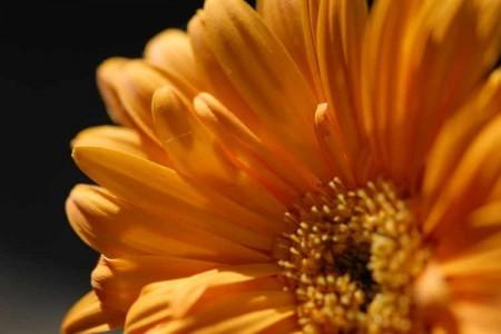 オレンジの花が開く