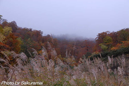 霧に煙る紅葉