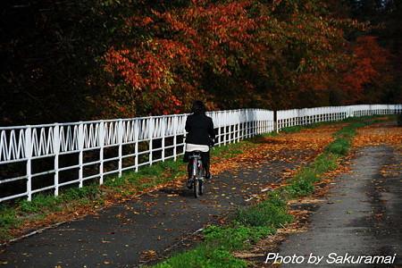 紅葉のなかの自転車