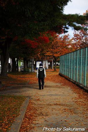 落葉の公園の散歩