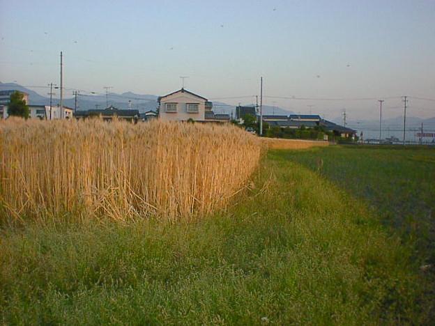 写真: umemoto128