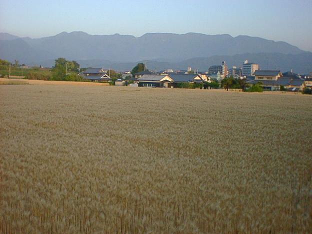 写真: umemoto120