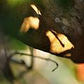 幹に枝影.2