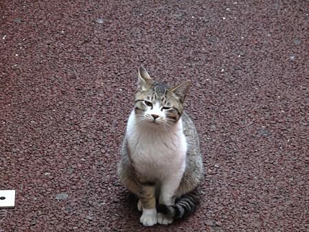 繁華街の野良猫