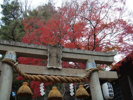 日枝神社の紅葉@修善寺
