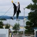 写真: イルカショー(能登島水族館)カマイルカ?