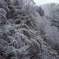 写真: みたけは雪