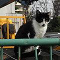 写真: 水門猫さん(R0012354)