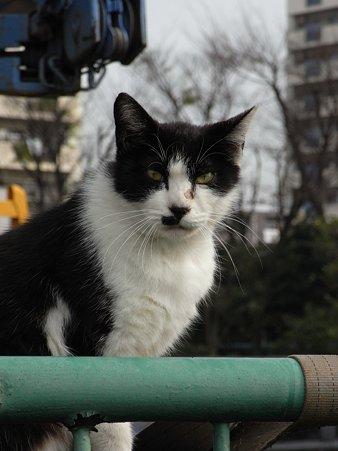 水門猫さん(R0012363)