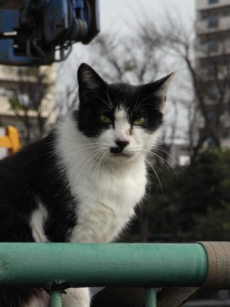 写真: 水門猫さん(R0012363)