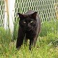 写真: 水門猫さん(R0012378)