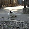 写真: R0013364