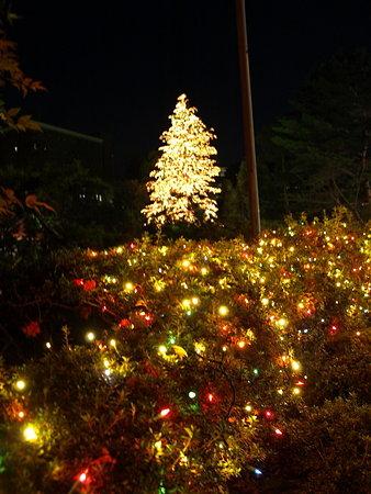 クリスマスツリー3(玉川学園)
