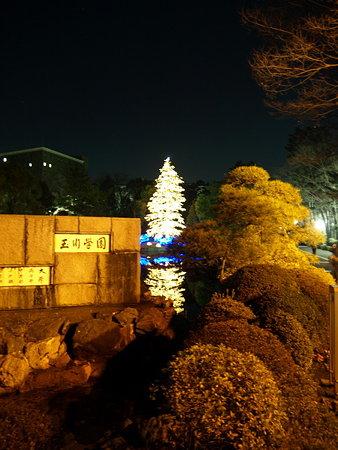クリスマスツリー2(玉川学園)