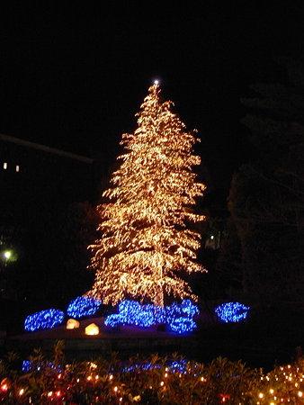 クリスマスツリー8(玉川学園)