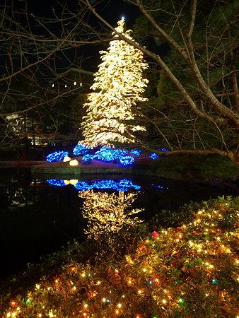 クリスマスツリー7(玉川学園)