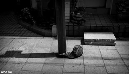 街猫423