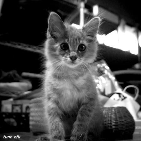猫がいる暮し