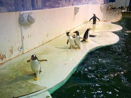 20140502 アドベン ペンギンオンアイス08