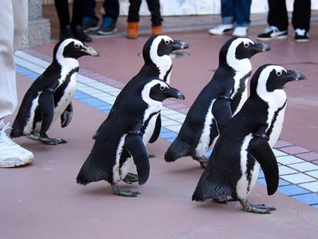 20121207 アドベン ペンギンパレード03