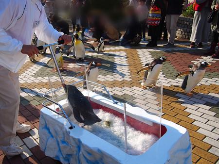 20131207 アドベン ペンギンパレード09