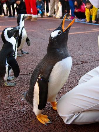 20131207 アドベン ペンギンパレード28