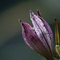 Photos: やっと開花に~